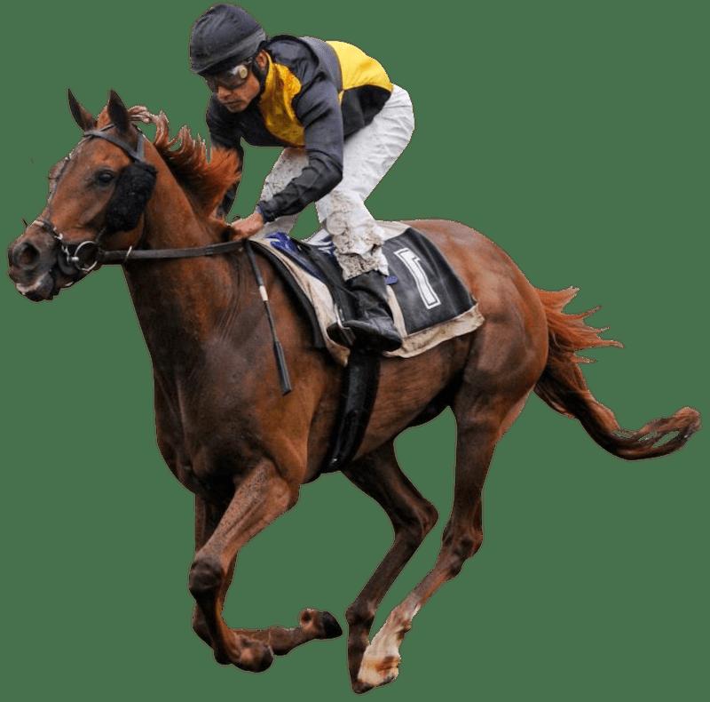 cavalier course